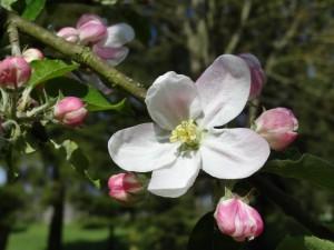 Wiosna w Albini